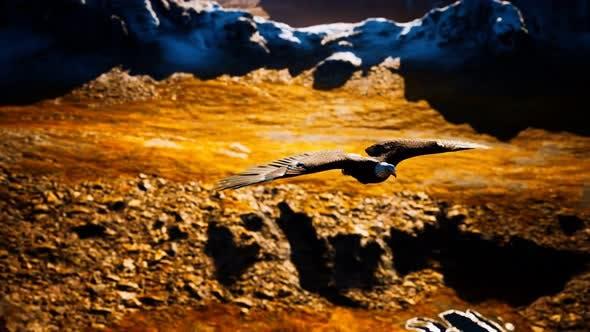 Pygargue à tête blanche au Ralenti en vol au-dessus des montagnes de l'Alaska