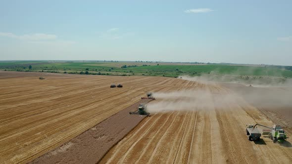Thumbnail for Aerial Drone View Many Harvesting Machine Cutting Down Ripe Wheat Crop Ready To Be Transported and