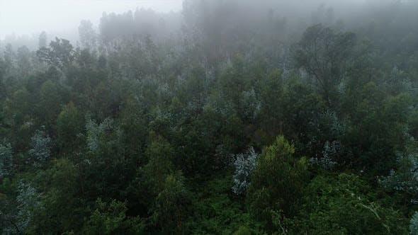 Thumbnail for Forest Fog