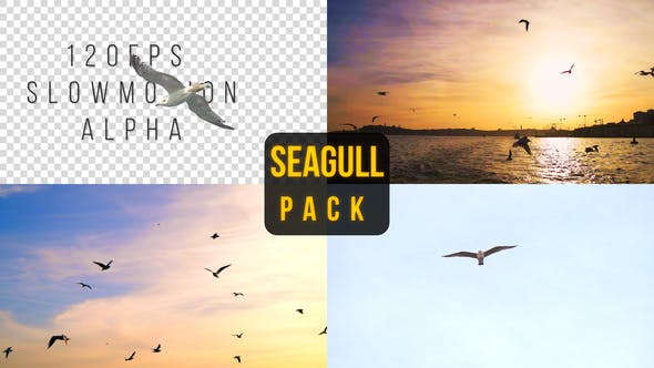 Thumbnail for Seagull