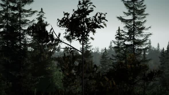 Thumbnail for Misty Nordic Forest in Early Morning with Fog