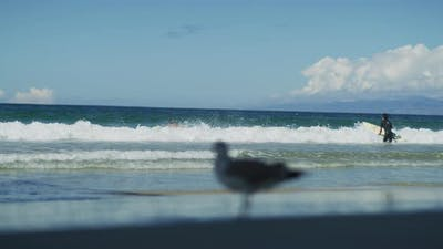 Surfers and a seagull