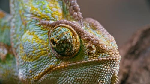 Chameleon Vision