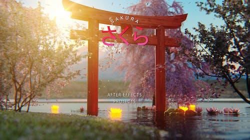 Sakura - Japan Opener