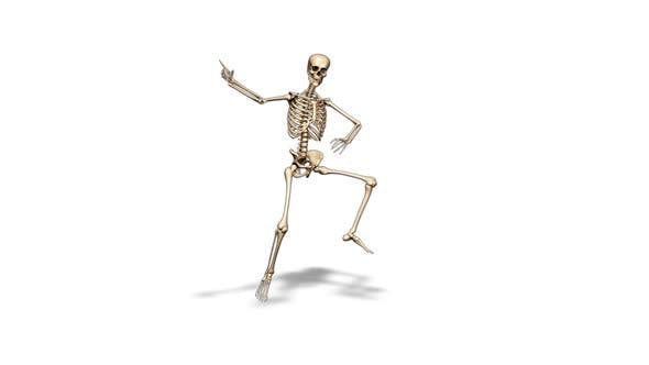 3D Skeleton Fun Dance  Looped on White