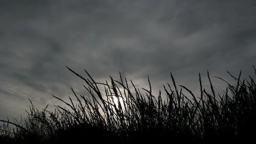 Dunkles Gras