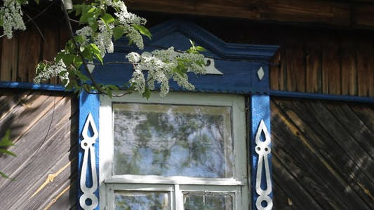 Thumbnail for Flowering Bird-Cherry Tree And Window