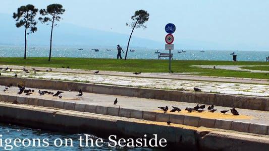 Pigeons On The Seaside