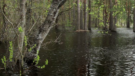 Thumbnail for Forest In Water