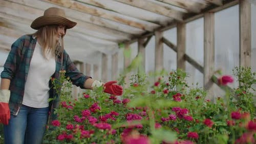 Happy Woman with Flowers in Greenhouse. People, Gardening and Profession Concept - Happy Woman