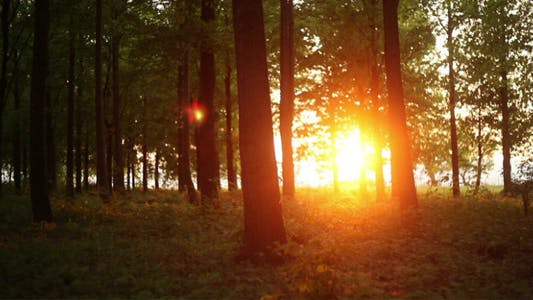 Thumbnail for Sunset In The Forest Time Lapse