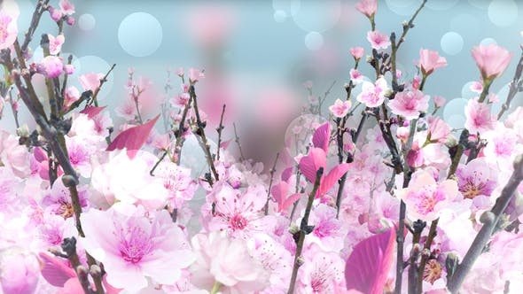 Thumbnail for Spring Blossom Pink