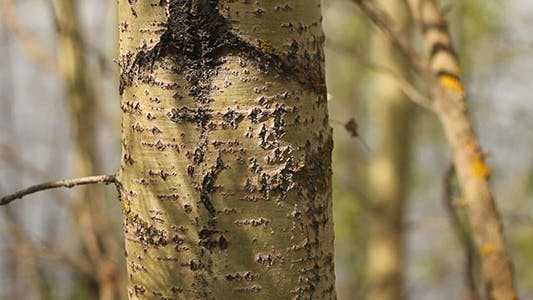 Thumbnail for Ants Crawling On A Tree Trunk