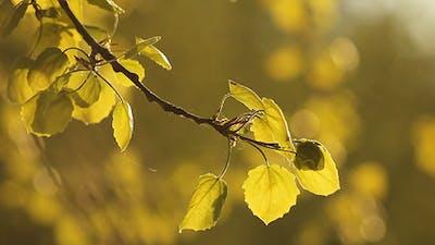 Leaves at Dusk