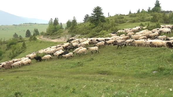 Thumbnail for Sheep Mountains