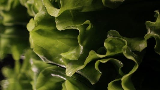 Thumbnail for Fresh Green Salad In Macro