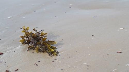 Seaweed On The Beach Close Up II
