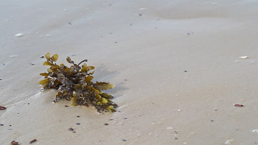 Thumbnail for Seaweed On The Beach Close Up II