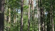 Vertical Video of a Summer Green Forest with Trees During the Day Slow Motion