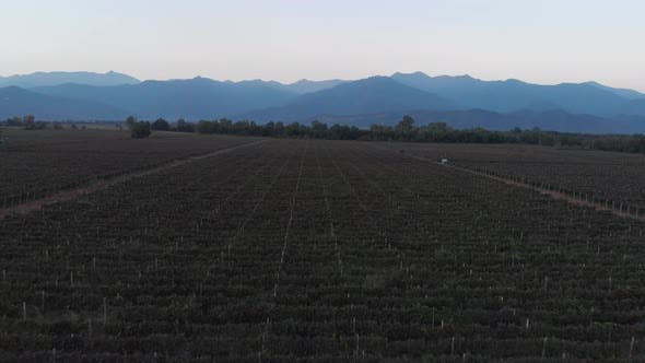 Thumbnail for Aerial flight over beautiful vineyard landscape in Kvareli, Georgia