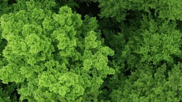 Thumbnail for Many Green Tree