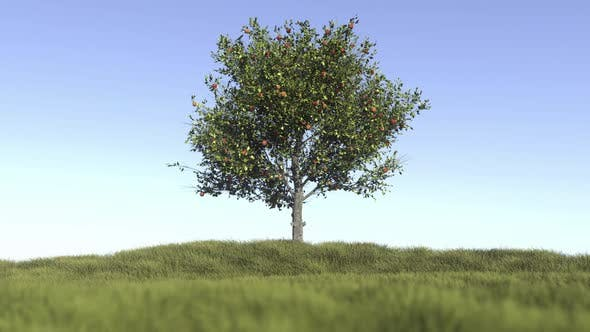 Thumbnail for Lonely Apple Tree On a Field