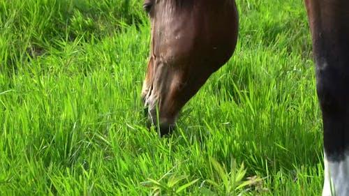 Sommer, Pferd, Wiese 8