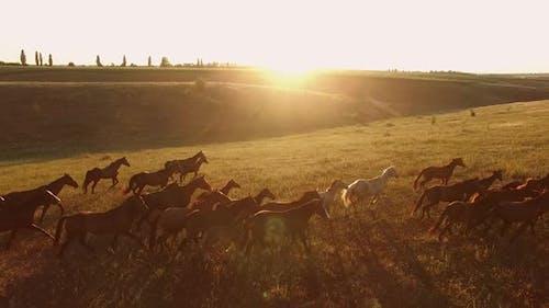 Horses Are Running.