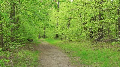 Beautiful Green Woods at Sunny Day