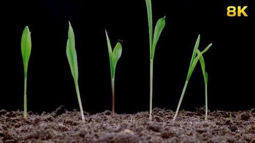 Growing Green Plants