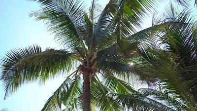 Beautiful coconut palm tree on blue sky background