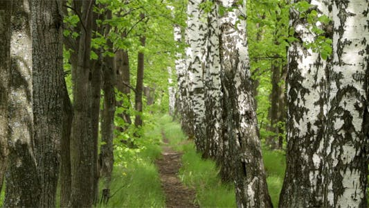 Thumbnail for Beautiful Footpath In The Forest
