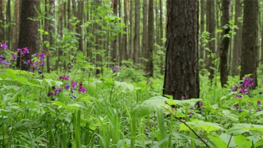 Thumbnail for Spring Forest