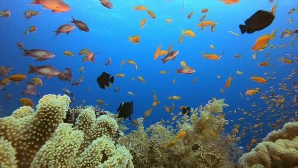 Thumbnail for Coral Garden Fish Scene