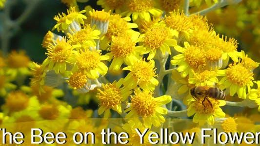 l' abeille sur les fleurs jaunes