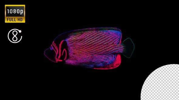 Neon Angel Fish Loop
