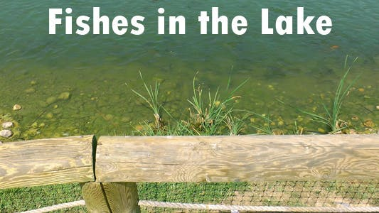 Thumbnail for Fishes In The Lake 2