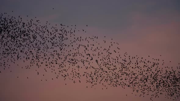 Cover Image for Bat Swarm