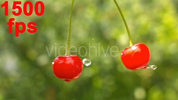 Thumbnail for Cherry Fruits