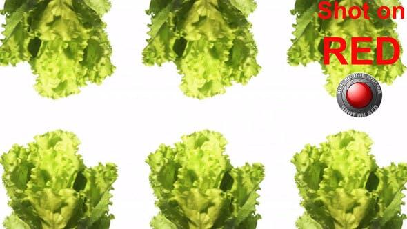 Lettuce Vegetables