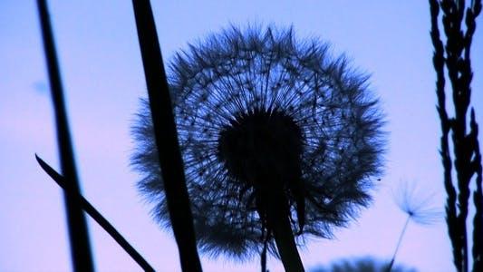 Thumbnail for Dandelion Silhouette Loop