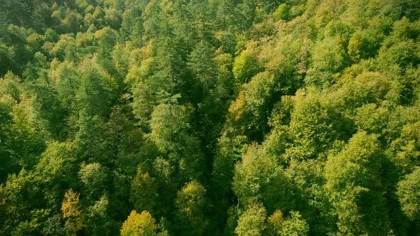 Cover Image for Aerial View of Forest