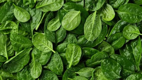 fresh spinach leaves top view. baby spinach. healthy food lifestyle