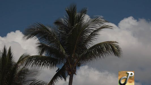 Thumbnail for Palm Trees Time Lapse