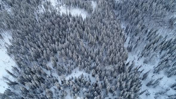 Thumbnail for Aerial view of beautiful tall snowy fir trees