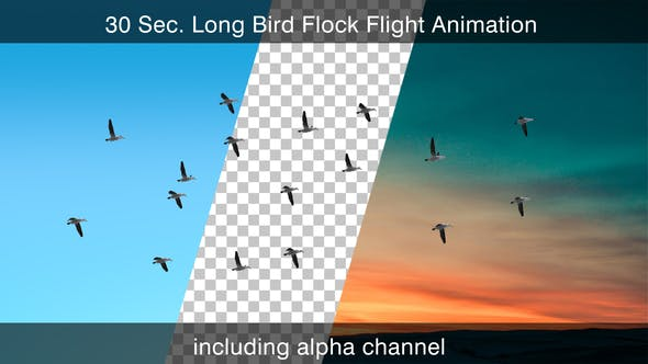 Thumbnail for Flying Bird Flock With Alpha Channel