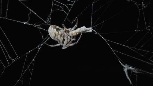 Spinne frisst Beute in der Nacht