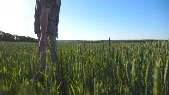 Thumbnail for Profile of Unrecognizable Young Farmer Walking Through the Cereal Field