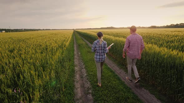 A Family of Farmers Walks Along the Road Between Wheat Fields at Sunset