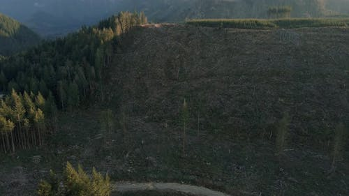 Aerial View Of Environmental Destruction With Deforestation On Mountain Forest
